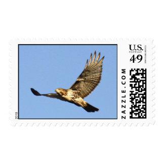halcón Rojo-atado Envio