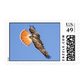 halcón Rojo-atado Sello Postal