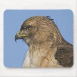 halcón Rojo-atado Tapetes De Ratón