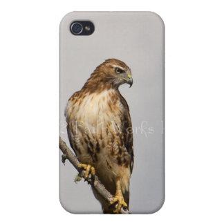 Halcón rojo de la cola iPhone 4/4S carcasas