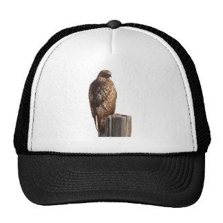 halcón rojo de la cola gorras de camionero