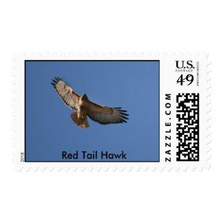 Halcón rojo de la cola sello