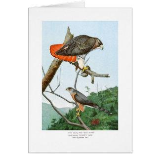 halcones Rojo-atado y del tonelero Tarjeta De Felicitación