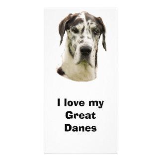 Halequin Great Dane pet photo Card