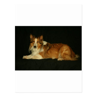 HALEY DOG POSTCARD