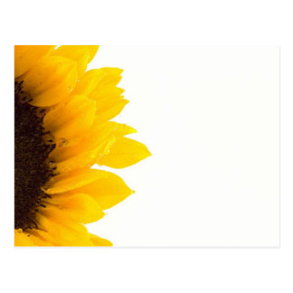 Half a Sunflower Postcard