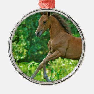 Half Arabian Colt Metal Ornament
