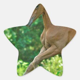 Half Arabian Colt Star Sticker