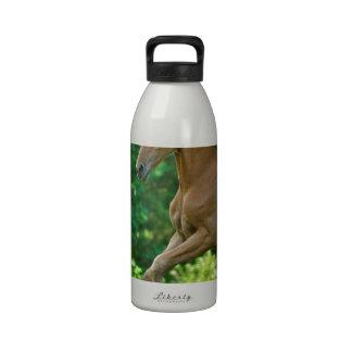 Half Arabian Colt Water Bottle