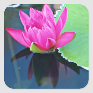 Half bloomed red water lily  flowers square stickers