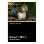 Half&Half Photo 0251 - Grey Squirrel Business Card Template