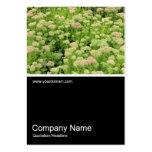 Half&Half Photo 0353 - Sedum (Autumn Joy) Business Card