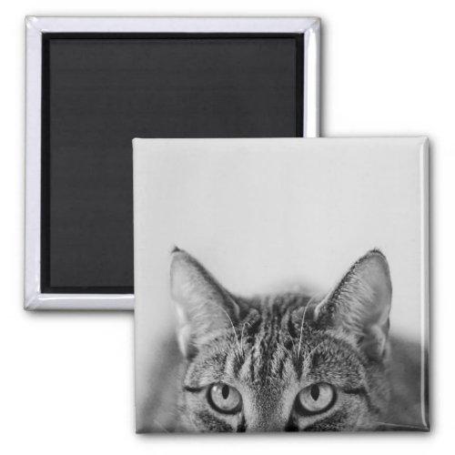 Half of the cat portrait magnet