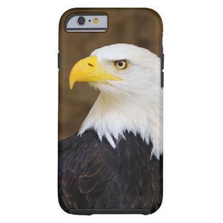 Haliaeetus americano Leucocephalus de Eagle calvo Funda De iPhone 6 Tough