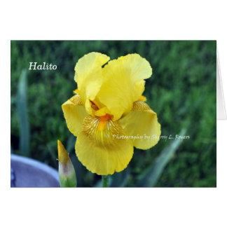 """Halito"" Choctaw Iris greeting Card"
