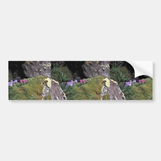 Hall Island Jacobs Ladder and Lousewort in auklet Bumper Sticker