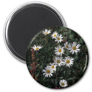 Hall Island wildflowers, Arctic daisy,Lousewort 2 Inch Round Magnet