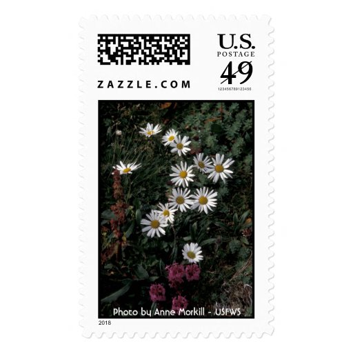 :Hall Island wildflowers, Arctic daisy,Lousewort Postage Stamp