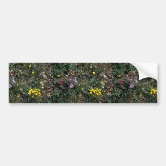 Hall Island wildflowers -Bog Saxifrage, Jacob's la Bumper Sticker