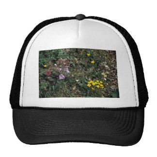 Hall Island wildflowers -Bog Saxifrage, Jacob's la Trucker Hat