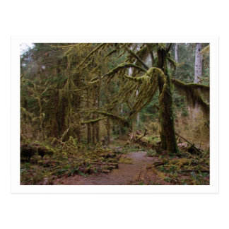 Hall of Mosses at Hoh Rainforest Postcard