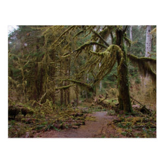 Hall of Mosses Post Card