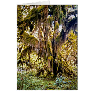 Hall of Mosses Trail, Olympic National Park Card