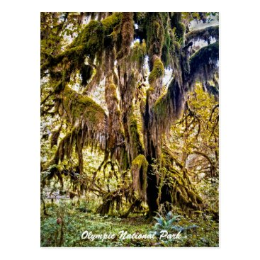 Christmas Themed Hall of Mosses Trail, Olympic National Park Postcard