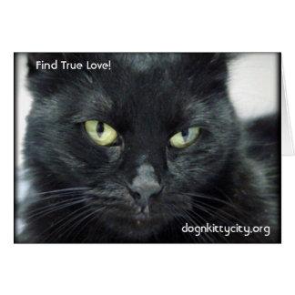 Halle - Find True Love! Postcard Greeting Card