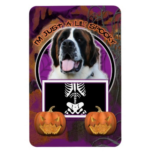 Halloween - apenas un Lil fantasmagórico - St Bern Imán Rectangular