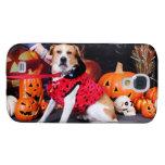 Halloween - beagle Labrador X - Jacob