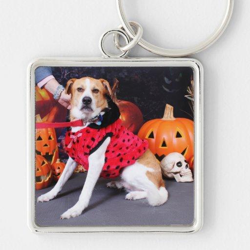 Halloween - beagle Labrador X - Jacob Llavero Personalizado