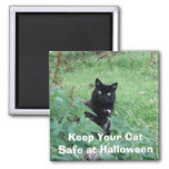 Halloween Black Cat In Grass Looks Curious Magnet at Zazzle