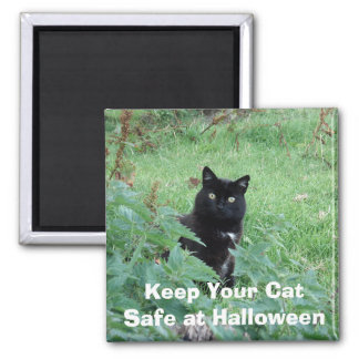 Halloween Black Cat in Grass Looks Curious Magnet