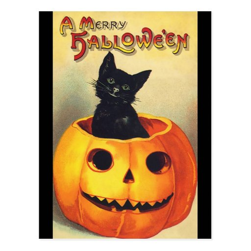 Halloween Black Cat In Pumpkin Vintage Art Postcard