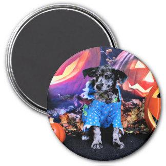 Halloween - Blue Heeler - B'Elanna Magnets