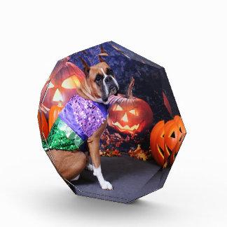 Halloween - boxeador - Roxy