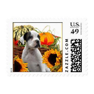 Halloween boxer puppy postage