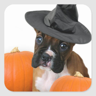 Halloween boxer puppy square stickers