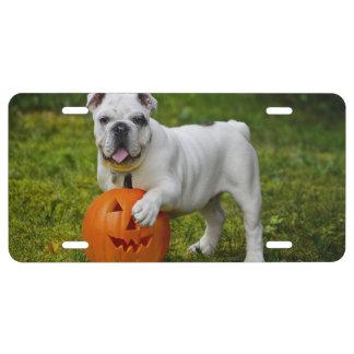 Halloween bulldog license plate