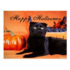 Halloween Cat Postcard at Zazzle