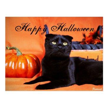 halloween Halloween Cat Postcard