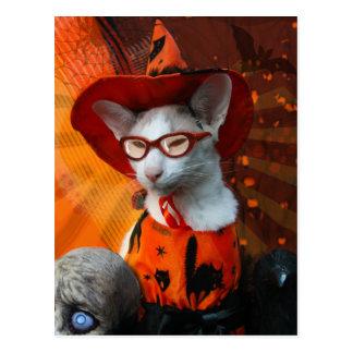 Halloween Cat Postcards