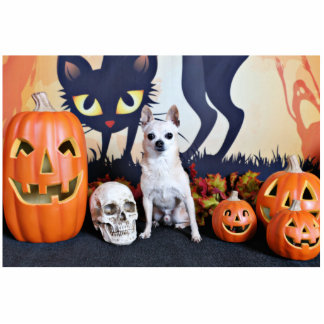 Halloween - Chihuahua - Chulo Photo Cut Outs
