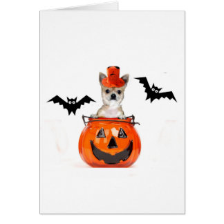 Halloween Chihuahua Dog Card