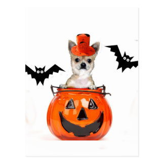 Halloween Chihuahua Dog Postcard