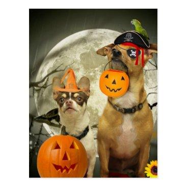 Halloween Themed Halloween chihuahua dogs postcard