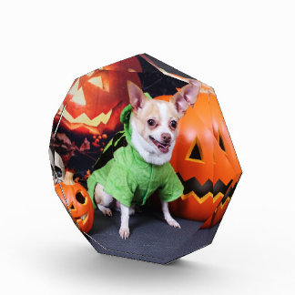 Halloween - chihuahua - trasto