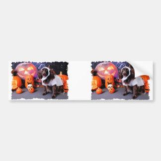 Halloween - Deutscher Wachtelhund - Matilda Bumper Stickers