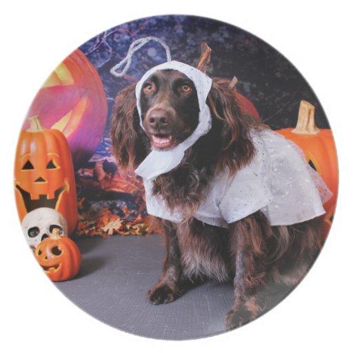 Halloween - Deutscher Wachtelhund - Matilda Platos